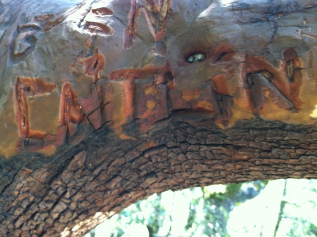 Caitlin carved in tree